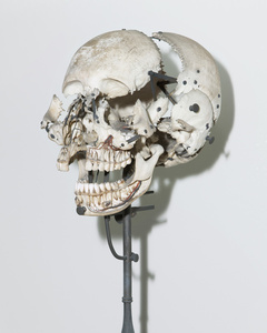 Skull used for anatomical studies. Dom João VI Museum (French Mission series)