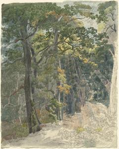 Rays of Sunlight Striking a Woodland Path