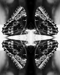 Papiliones No 4