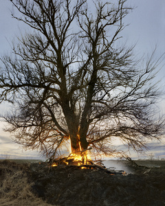 Tree on Fire