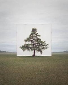 Tree…#6