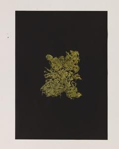 Golden Singular – Instant Noodle Natural