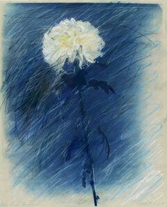 Blue Chrysanthemum #1