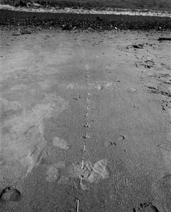 Untitled (Areia, Londres | Sand, London)