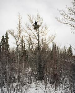 Aerie, Yukon