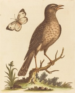 Brown Bird with a Butterfly