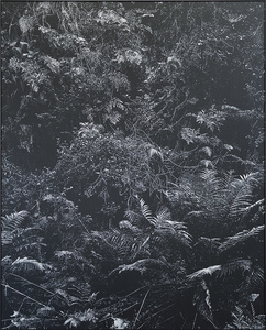 Undergrowth II