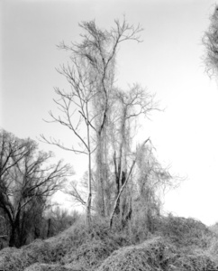 Thicket XXXIII (Thickets), Ed. 2/5