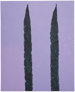 The Cypress Trees