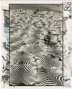 Zebra Carpet, Lariak Estate
