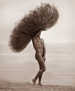 Male Nude With Tumbleweed, Paradise Cove