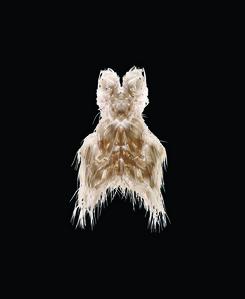 Biopiracy Dress