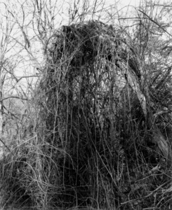 Thicket II (Thickets), Ed. 2/5
