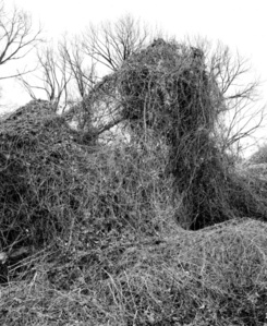 Thicket XL