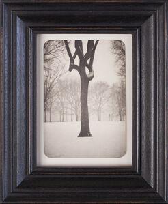 Tree, Central Park