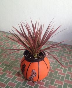 Tropical Readymade (basketball naranja)