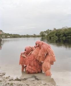 La danse des ouakaris chauves