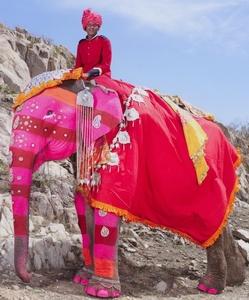 Painted Elephant 16