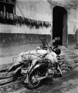 Pig On A Motorcycle - Niehe