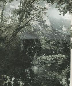 Garden  No.6