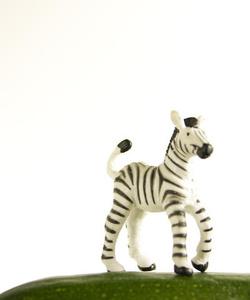 Zucchini the Zebra