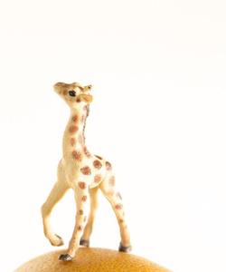 Grapefruit the Giraffe