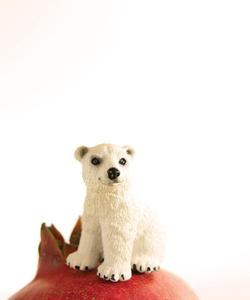 Pomegranate the Polar Bear