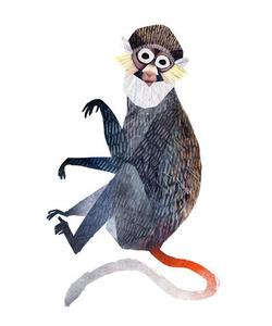 Sclater's Guenon