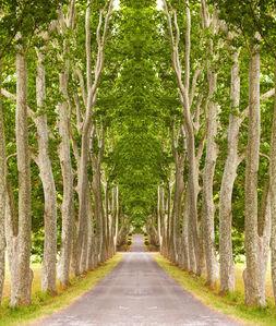 Trees II, St. Tropez