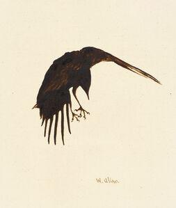 Crow #14