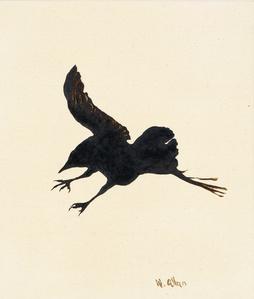 Crow #15