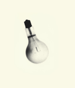 Spent Bulb Exposed by a Live One
