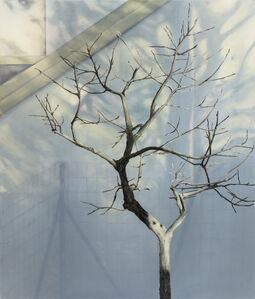 untitled (tree 2)