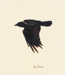 Crow #13