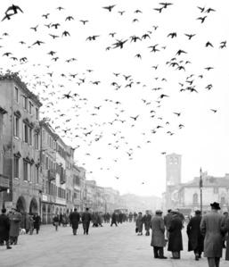 Mezzogiorno a Chioggia - Chioggia