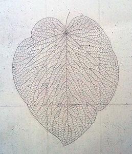 The Leaf 133120