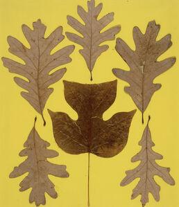 Leaf Study IX