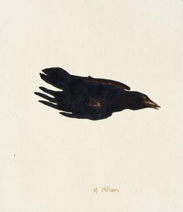 Crow #7
