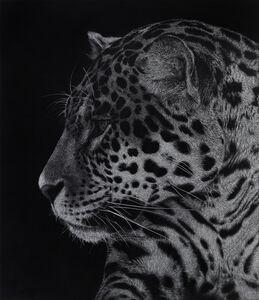 Kedera (Spotted Jaguar)