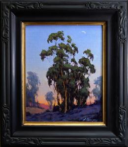Eucalyptus Wonder