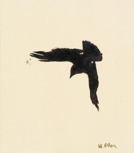 Crow #16