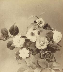 fleurs photographiées