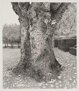 Old Tree in a Belgian Garden, Kapellen in Antwerp