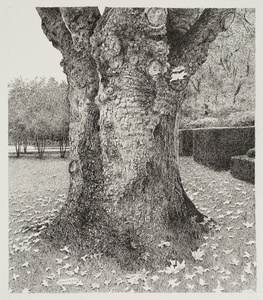 Old Tree in a Belgian Garden, Kapellen in Antwerp