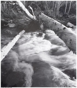 Buckeye Creek, 3/50