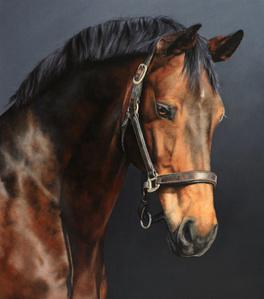 Portrait of a Horse: Winston
