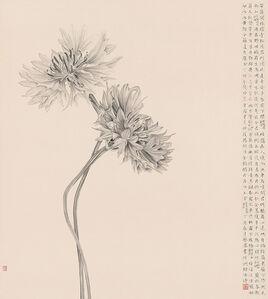 A Person as Ethereal as Chrysanthemums 人淡如菊