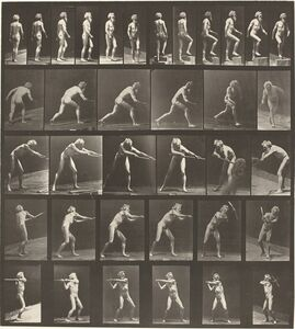 Animal Locomotion, Plate 521
