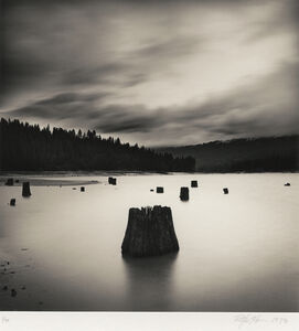 Tree Stumps #1, Bass Lake, California