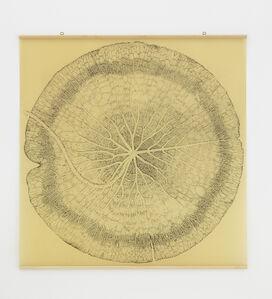 Nymphaeaceae I